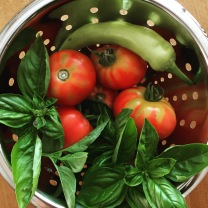 Basil, tomatoes, and banana peppers about to become salsa.